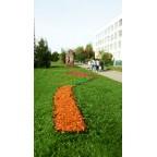Декоративная щепа/мульча оранжевая (Эконом)